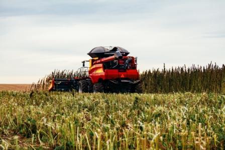combine harvesting a hemp crop