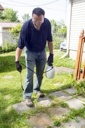 man spraying weed killer on cobblestone walk